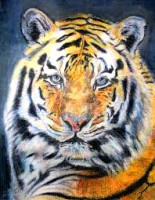 Drawing Tigers and Lions (July school holiday program)