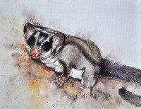 Sugar Glider Possums in Watercolour (Sept/Oct School Hols)